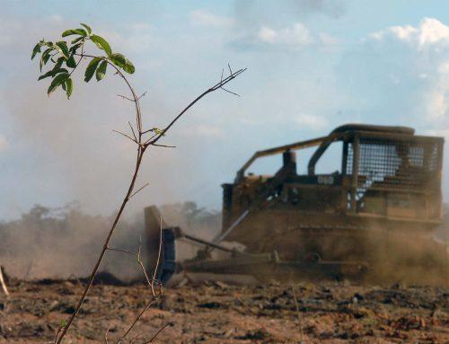 MP no Debate – Julgamento do Código Florestal deve viabilizar produção e preservação